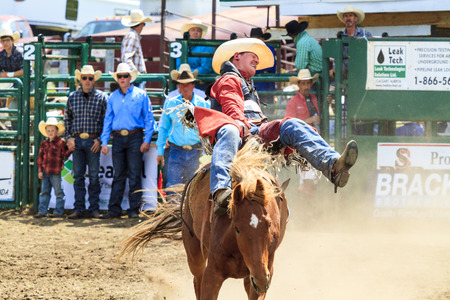 annual event: WATER VALLEY CANADA  JUN 6 2015:Unidentified Cowboy participating in the  Bareback Bronco Water Valley Rodeo.This annual event is important for the rural as well as the sport loving community. Editorial