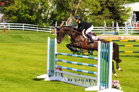 snob: CALGARY CANADA - JUN 7 2015: Unidentified rider in action during the prestiges Spruce Meadows International hors jumping competition,  riders comes all over the world to compete. Editorial