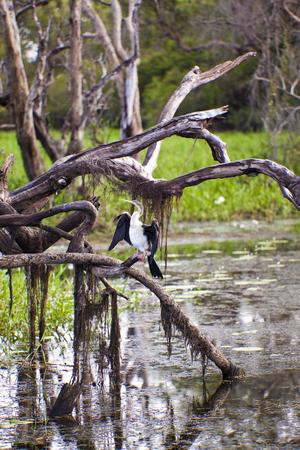 kakadu: Bird life in Kakadu National Park, Australia