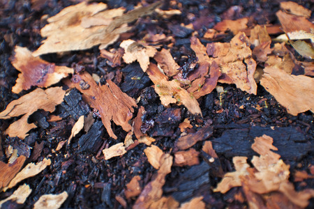 kakadu: Fallen bark of gum tree in Kakadu Nat. Park  Australia