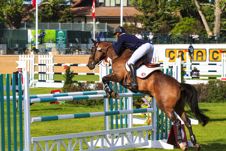 CALGARY CANADA - JUN 7 2015   Unidentified rider in action during the prestige s Spruce Meadows International hors jumping competition,  riders comes all over the world to compete. Editöryel
