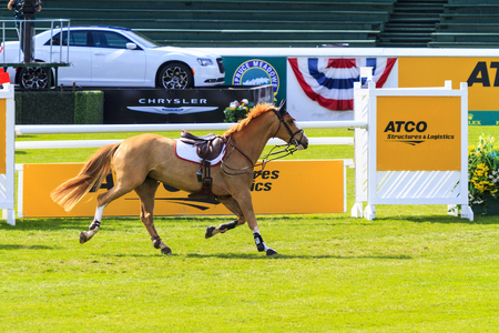 co action: CALGARY CANADA - JUN 7 2015 :  Spruce Meadows International hors jumping competition, — Stock Photo #77782566 CALGARY CANADA - JUN 7 2015 Unidentified rider in action during the prestige s Spruce Meadows International hors jumping competition, riders co