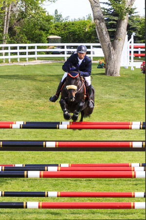 snob: CALGARY CANADA JUN 13 2015: Unidentified rider in action during the prestige s Spruce Meadows International hors jumping competition, riders comes all over the world to compete. Editorial