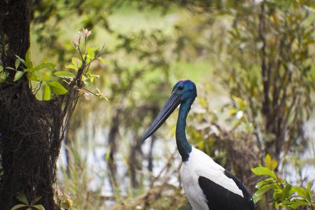 kakadu: Bird Life In Kakadu National Park Stock Photo