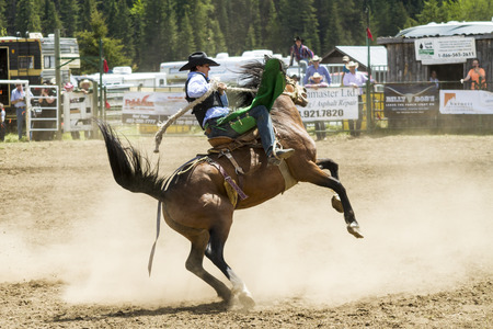 WATER VALLEY, CANADA-JUN 6 2015:Unidentified Cowboy participating in the at the Bareback Bronco Water Valley Rodeo. This annual event is important for the rural as well as the sport loving community. Editorial