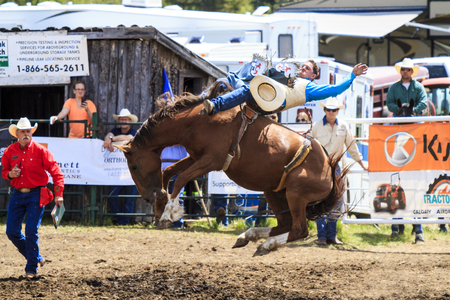 arena rodeo: WATER VALLEY, CANADA-JUN 6 2015:Unidentified Cowboy participating in the at the Bareback Bronco Water Valley Rodeo. This annual event is important for the rural as well as the sport loving community. Editorial