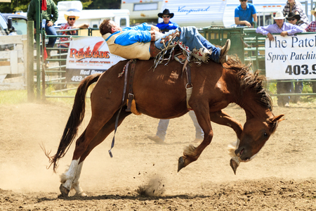 WATER VALLEY, CANADA-JUN 6 2015:Unidentified Cowboy participating in the at the Bareback Bronco Water Valley Rodeo. This annual event is important for the rural as well as the sport loving community.
