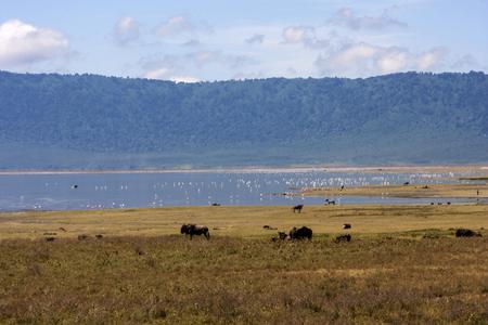 cater: Landscape In Gnorongoro Cater, Tanzania Stock Photo