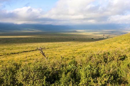 cater: Landscape In Gnorongoro Cater In Tanzania