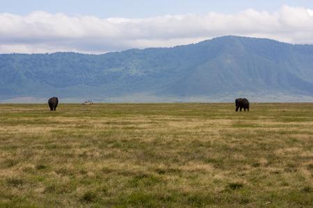 cater: Landscape Of Gnorongoro Cater, Tanzania