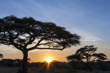 Typical African Sunset With Acacia Trees Stock Photo