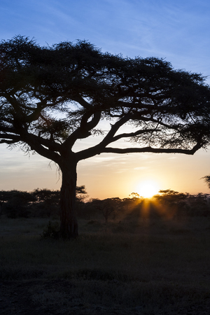 typical: Typical African Sunset