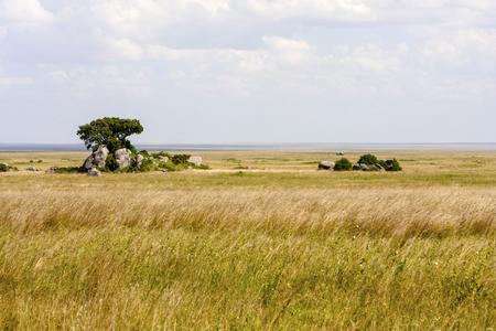 Typische afrikanische Landschaft