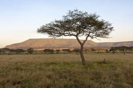 Afrikanische Landschaft, Tansania