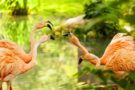 Group of pink flamingos near water Imagens
