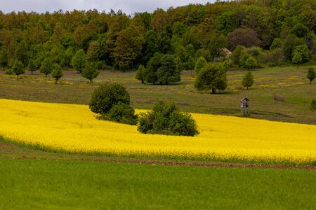 Field of rapeseed (canola) with beautiful cloud scape - plant for green energy Reklamní fotografie