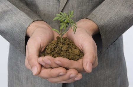 Businessman holding a sapling Stock Photo - 10167810