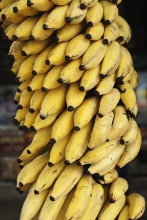 Bunch of bananas hanging at a market stall, Mysore, Karnataka, India