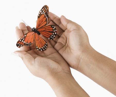Womans hands holding a butterfly