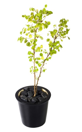 Close-up of a potted plant Stock Photo - 10253043