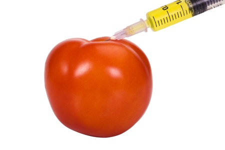 hybridization: Tomato being injected with a syringe
