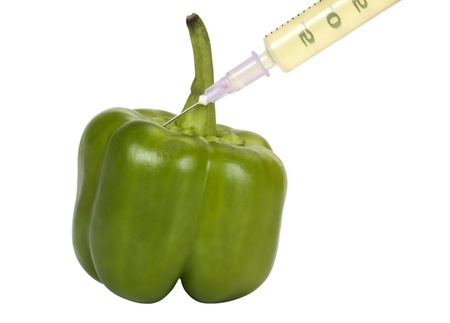 hybridization: Green bell pepper being injected with a syringe