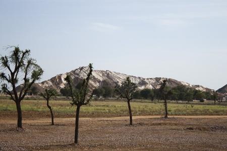 Tree with a mountain range, Ahmedabad, Gujarat, India Imagens