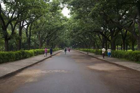 karnataka: Carretera que pasa por un parque, Cubbon Park, Bangalore, Karnataka, India