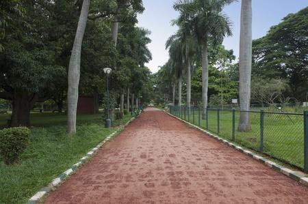 Palm trees along the footpath, Lal Bagh Botanical Garden, Bangalore, Karnataka, India Standard-Bild