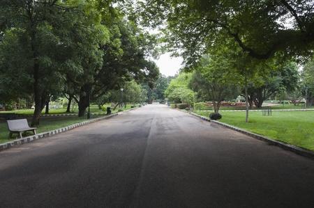 Trees along the road, Lal Bagh Botanical Garden, Bangalore, Karnataka, India