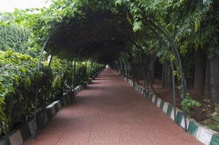 Fußweg von einem botanischen Garten, Lal Bagh Botanical Garden, Bangalore, Karnataka, Indien Standard-Bild - 33406446