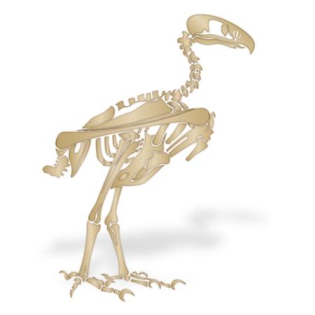 terror: Skeleton of a terror bird Stock Photo