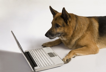 German Shepherd dog using a laptop Stock Photo - 10245748