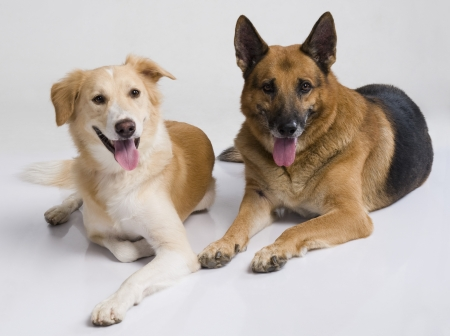 Two dogs sitting together Stock Photo