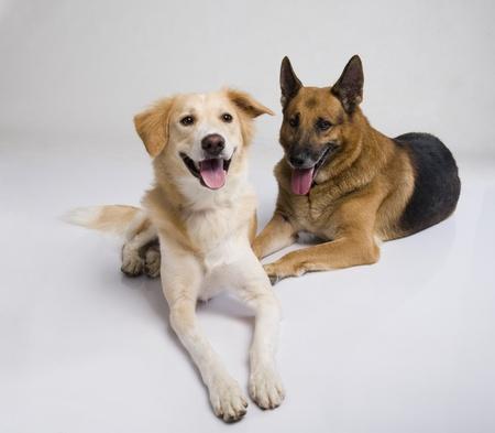 dogs sitting: Dos perros sentados juntos