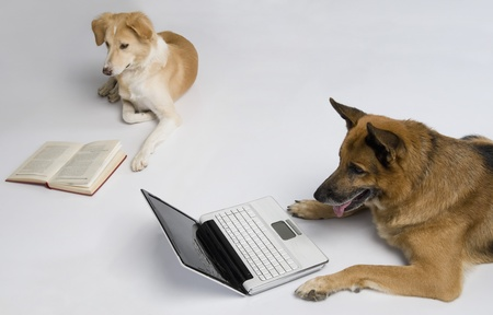 Dog using a laptop with another dog reading a book photo