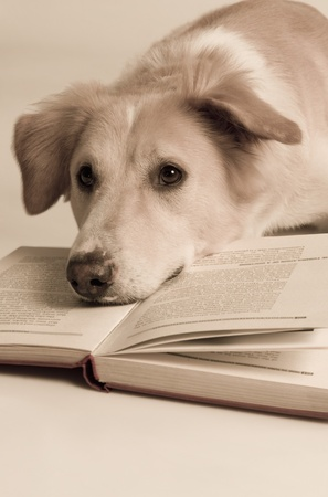 Dog with a book