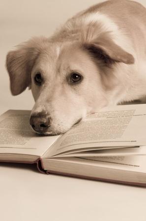 Hond met een boek