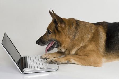노트북을 사용하는 독일 셰퍼드 강아지