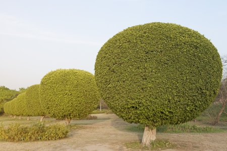 Ornamental trees in a garden, Lotus Temple, New Delhi, India photo