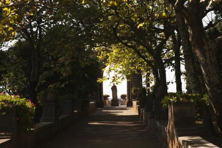 Bäume in einem Garten, Amalfi, in der Provinz Salerno, Kampanien, Italien Standard-Bild - 24663251