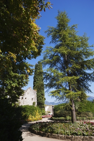 Bäume in einem Garten, Amalfi, in der Provinz Salerno, Kampanien, Italien Standard-Bild - 24664323
