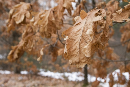 Close-up of a dry leaf, Srinagar, Jammu And Kashmir, India