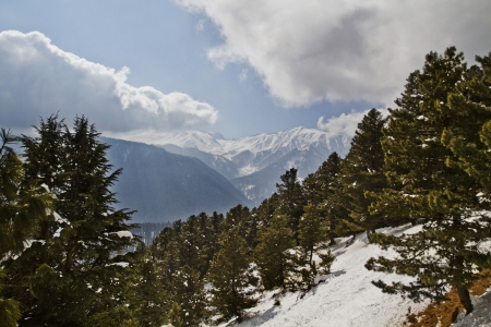 Trees on a snow covered mountain, Kashmir, Jammu And Kashmir, India