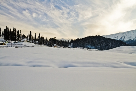 Trees on a snow covered hill, Kashmir, Jammu And Kashmir, India