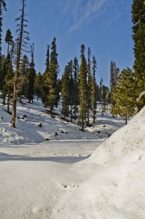 Snow covered valley in winter, Gulmarg, Jammu And Kashmir, India Stok Fotoğraf