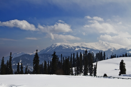 Trees on a snow covered landscape, Kashmir, Jammu And Kashmir, India