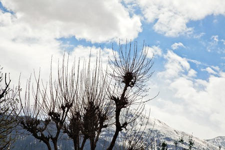 Trees with mountain range , Manali, Himachal Pradesh, India