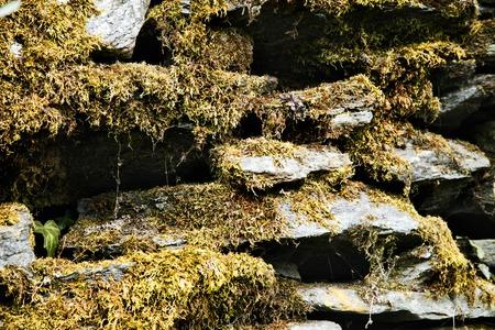 Lichen on rocks, Manali, Himachal Pradesh, India