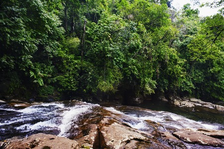 River flowing through a forest, Shillong, Meghalaya, India Imagens
